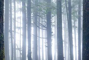 RA News: Edanticonfが『Forest Echo』を発表